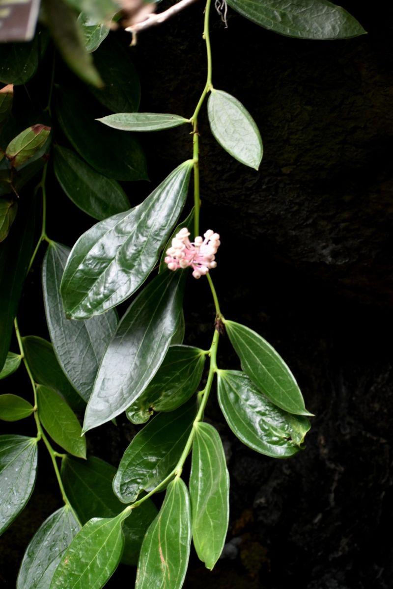再拍艳苞莓_图1-15