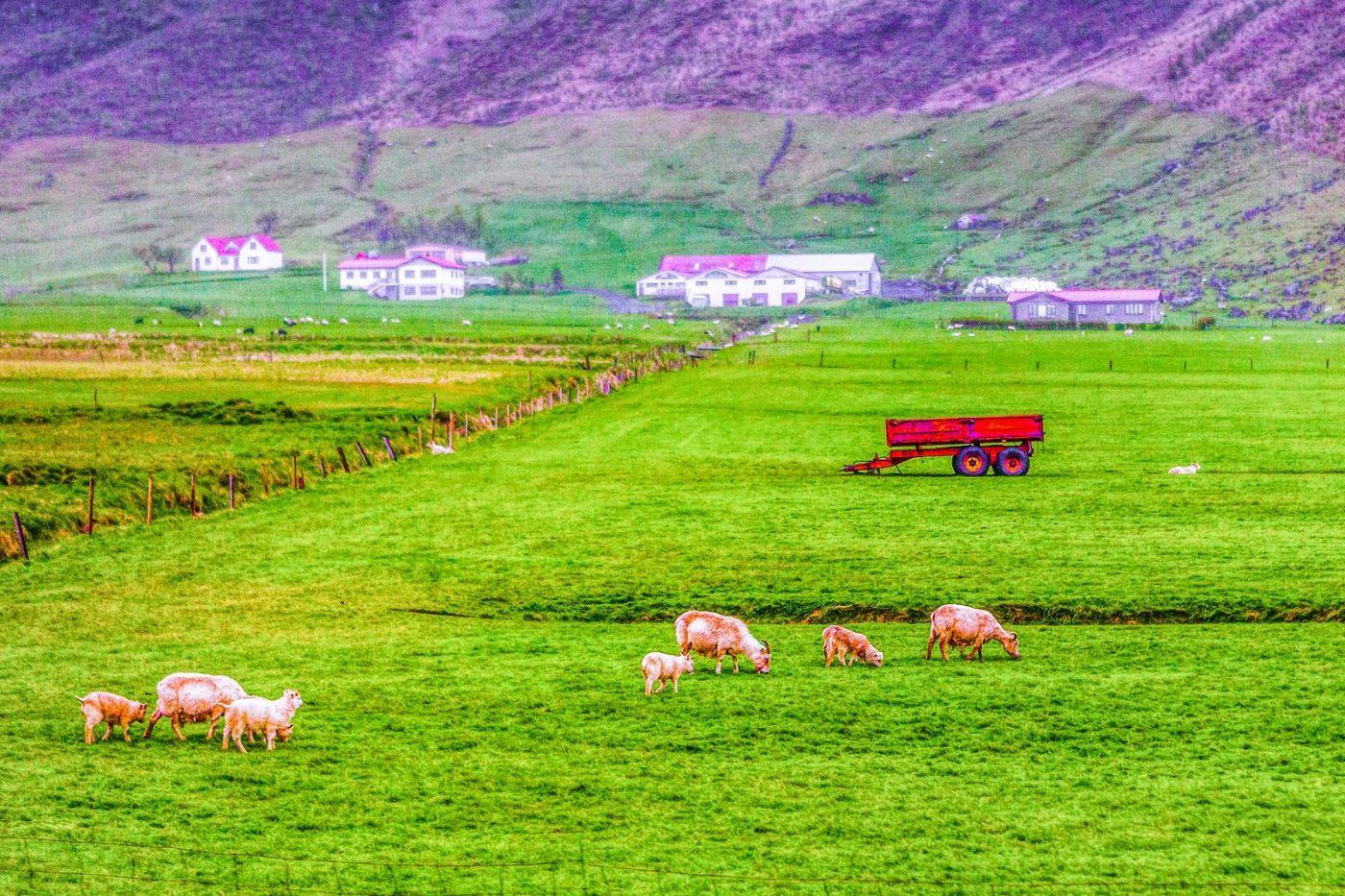 冰岛风采,大山民舍羊群_图1-17
