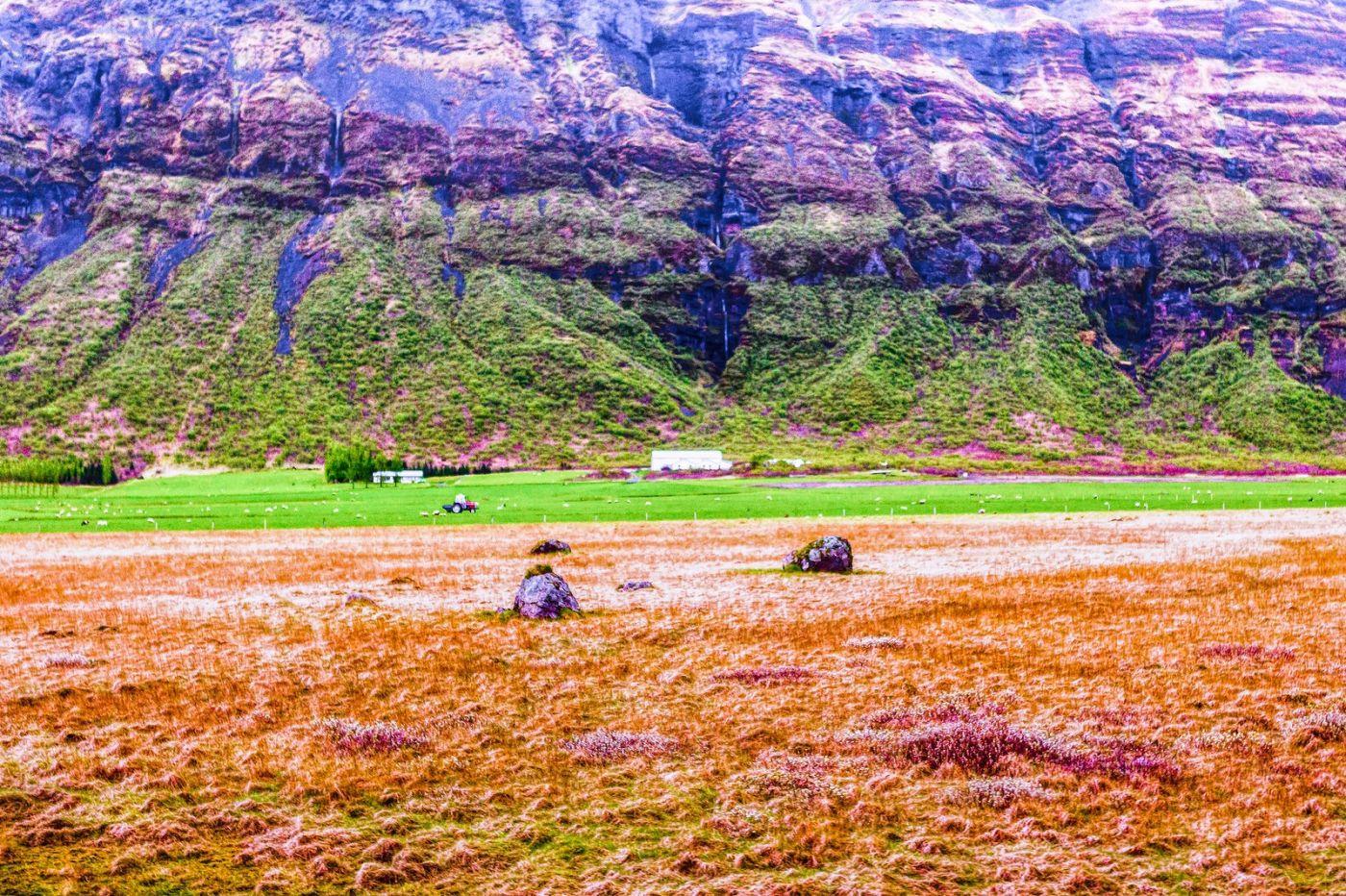 冰岛风采,大山民舍羊群_图1-20