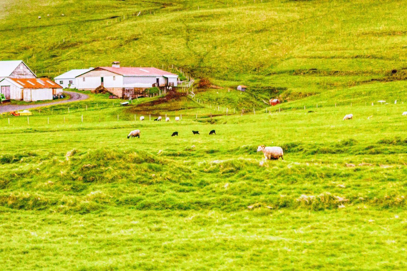 冰岛风采,大山民舍羊群_图1-14