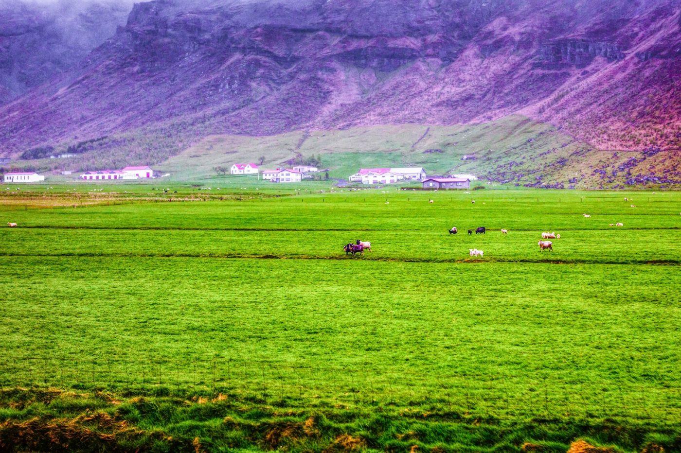 冰岛风采,大山民舍羊群_图1-13