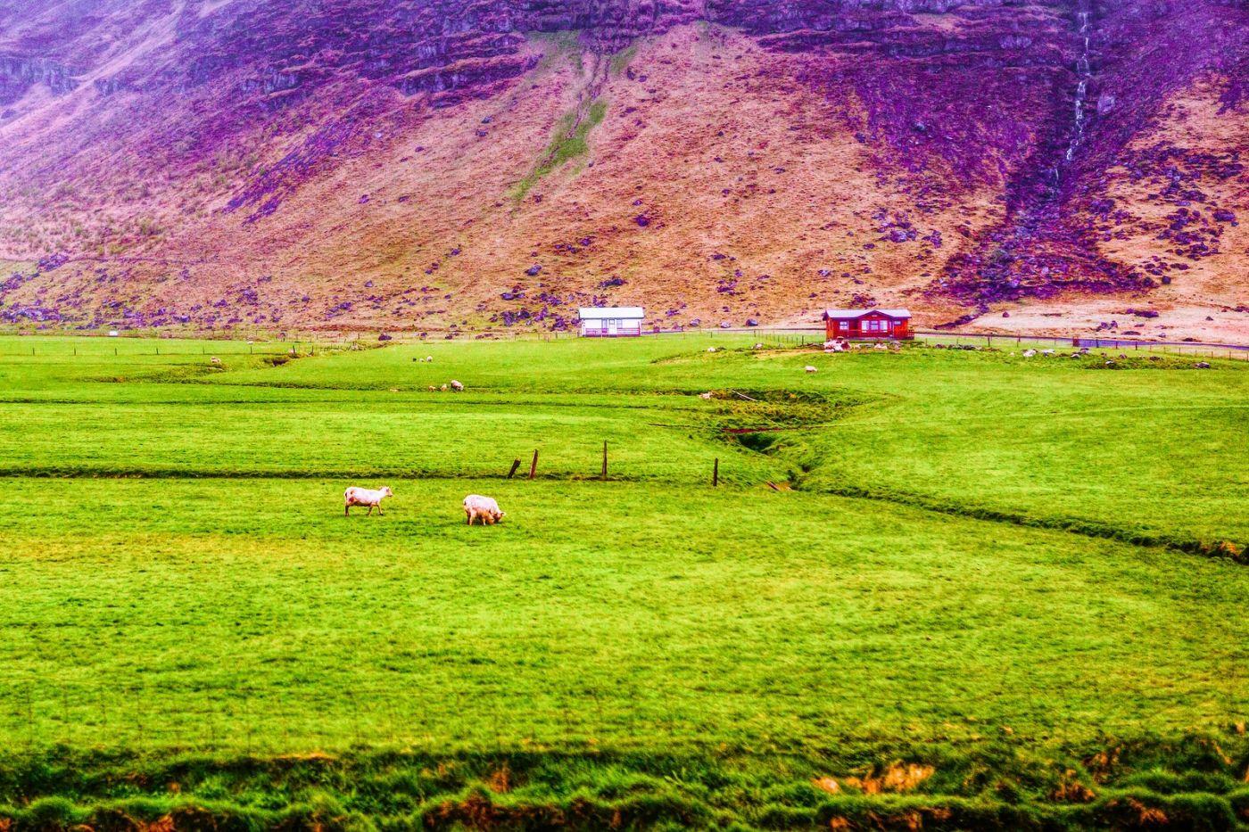 冰岛风采,大山民舍羊群_图1-9
