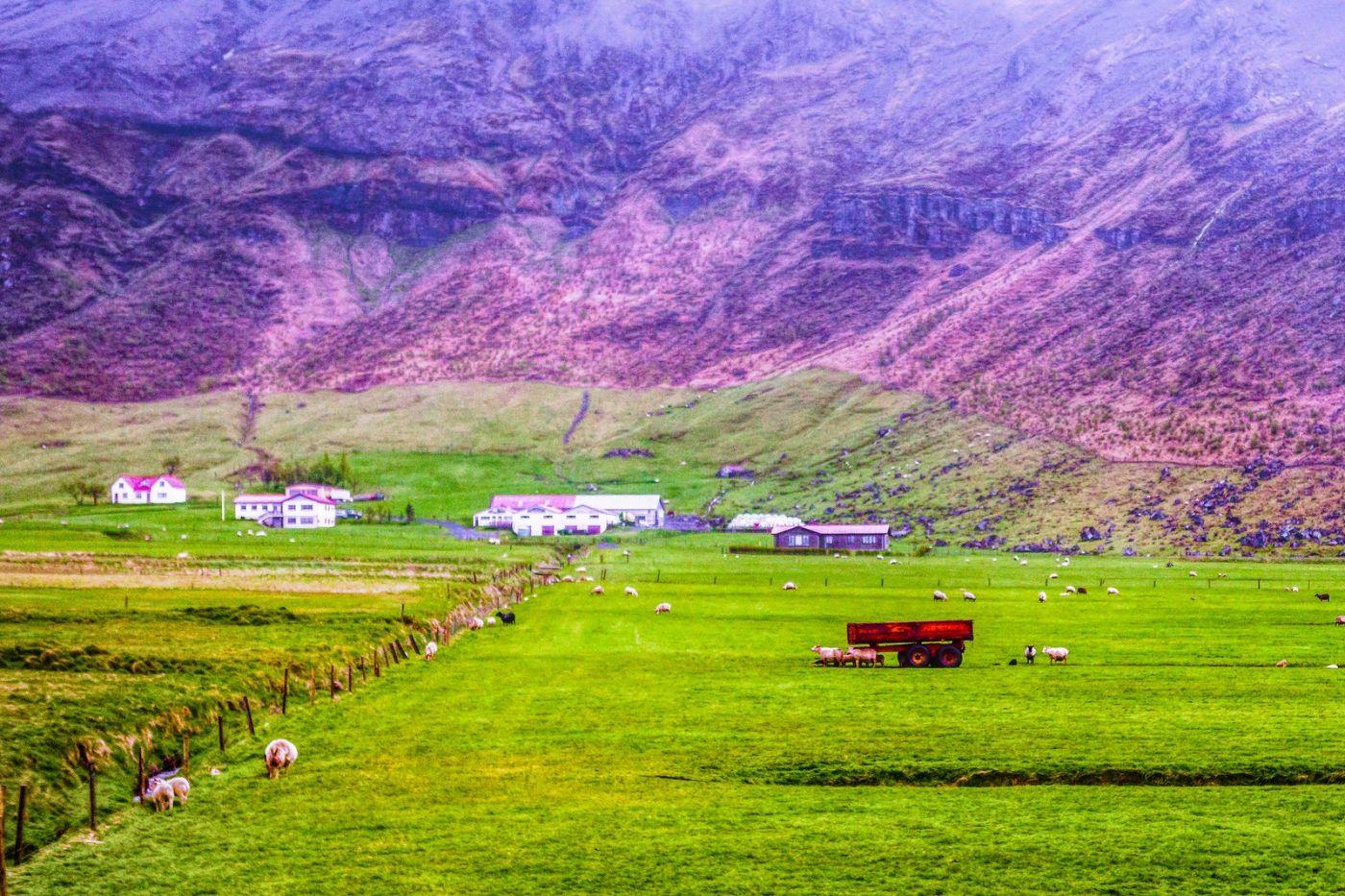 冰岛风采,大山民舍羊群_图1-12