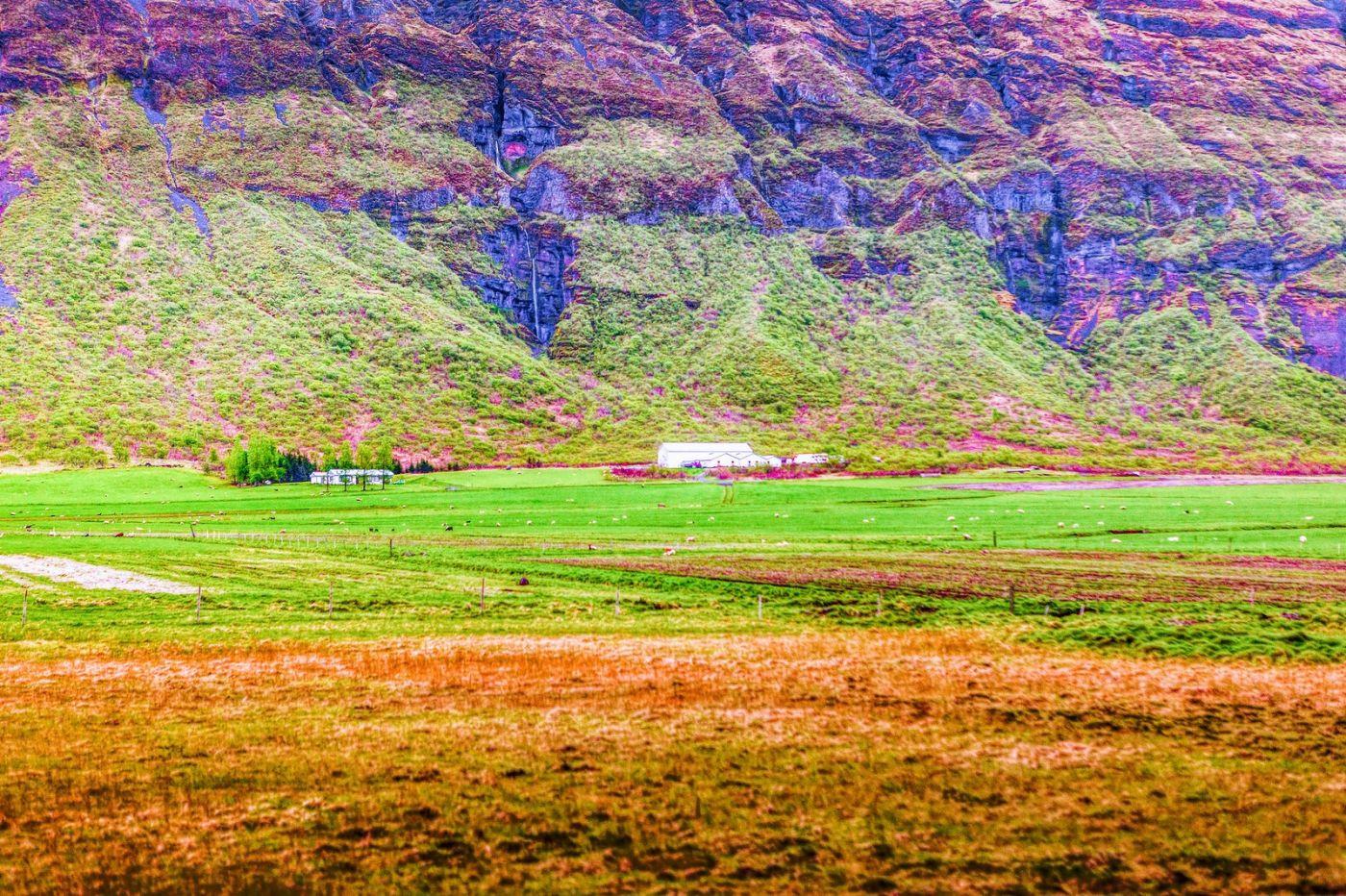 冰岛风采,大山民舍羊群_图1-5