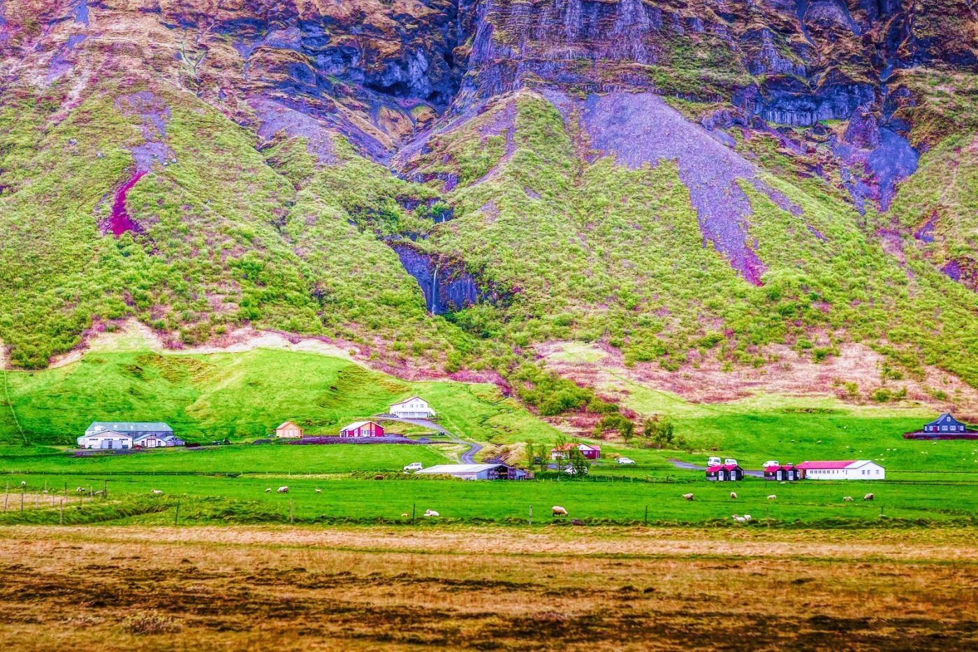 冰岛风采,大山民舍羊群_图1-3
