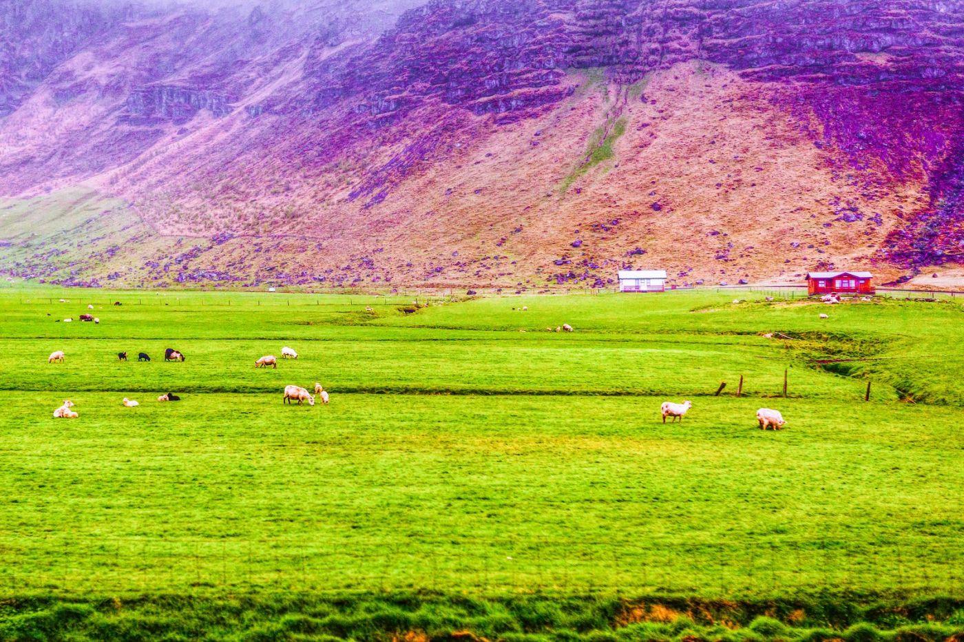 冰岛风采,大山民舍羊群_图1-24