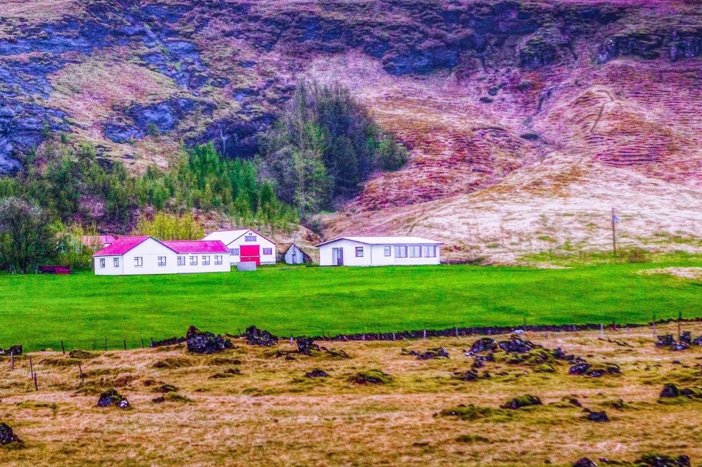 冰岛风采,大山民舍羊群_图1-23
