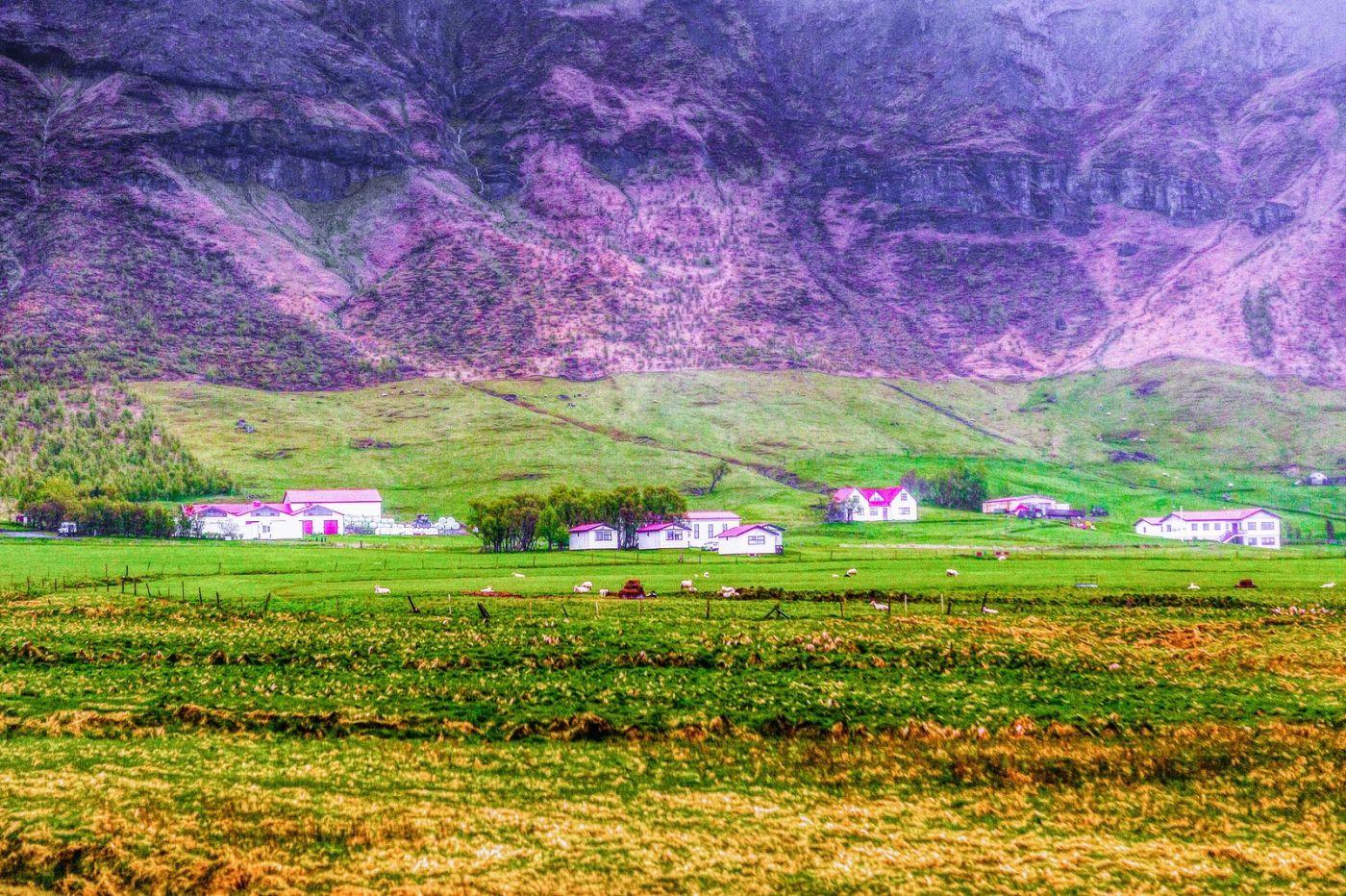 冰岛风采,大山民舍羊群_图1-22