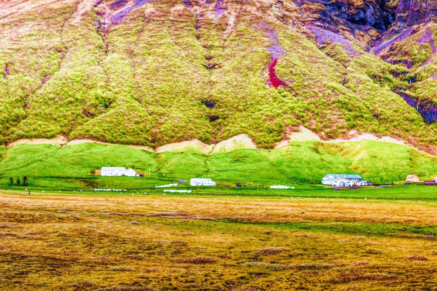 冰岛风采,大山民舍羊群_图1-27