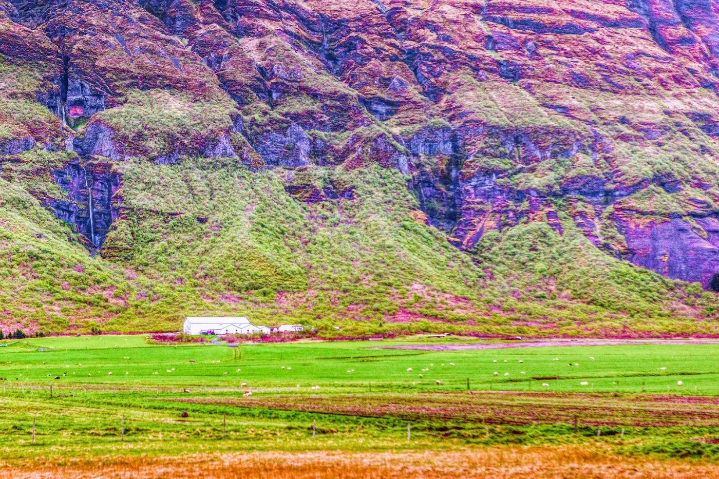 冰岛风采,大山民舍羊群_图1-32