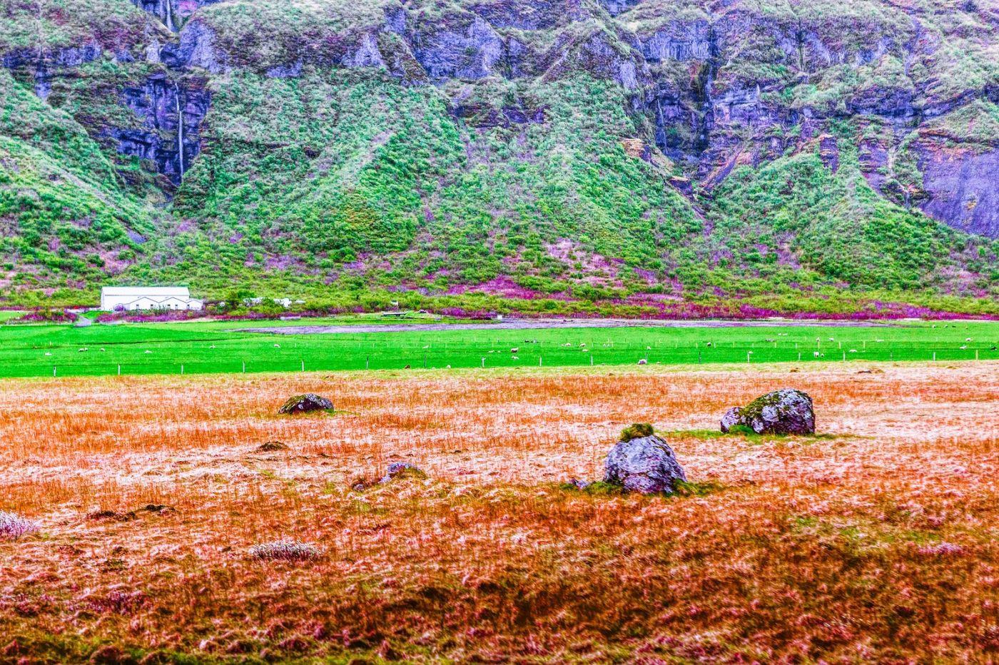 冰岛风采,大山民舍羊群_图1-33