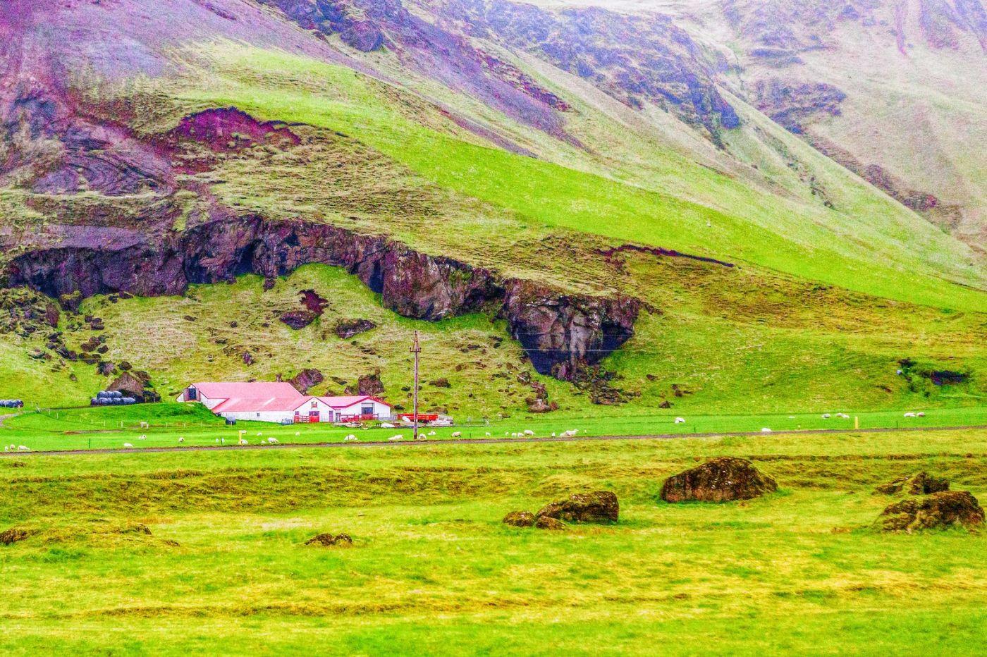 冰岛风采,大山民舍羊群_图1-36