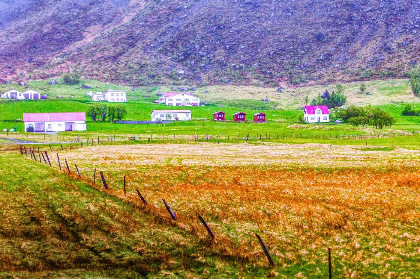 冰岛风采,大山民舍羊群_图1-40