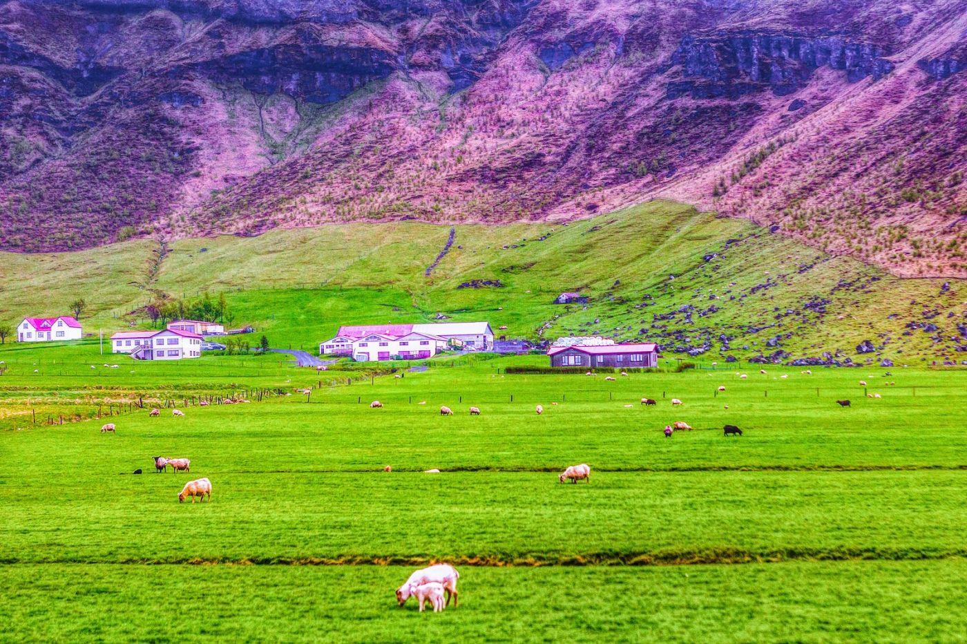 冰岛风采,大山民舍羊群_图1-39