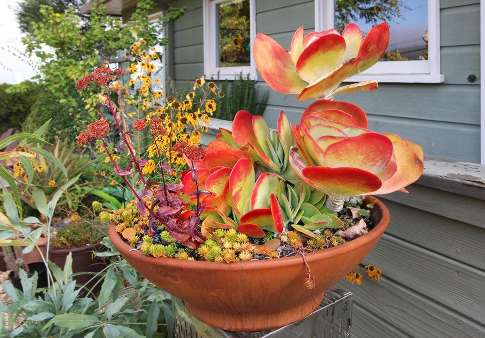 Ellen Frank Garden 花园_图1-1