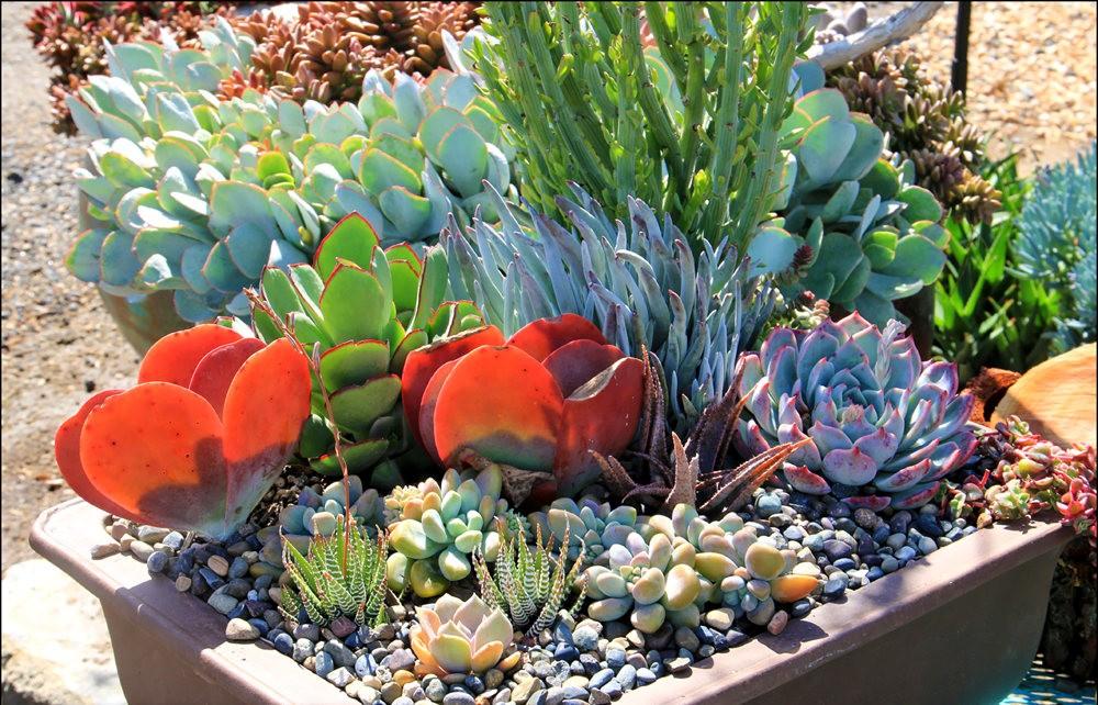 Ellen Frank Garden 花园_图1-9