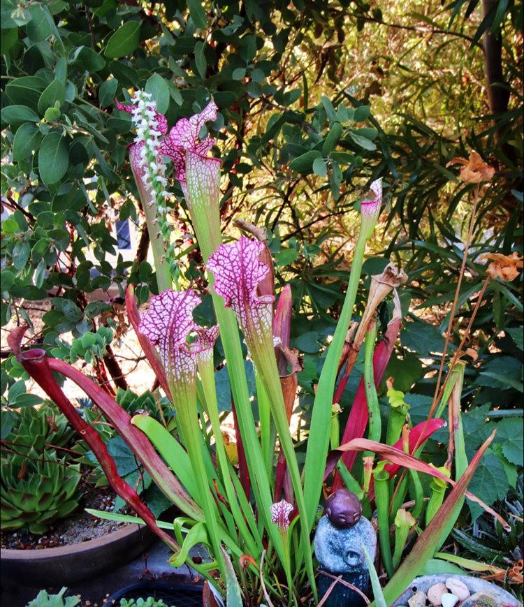 Ellen Frank Garden 花园_图1-25