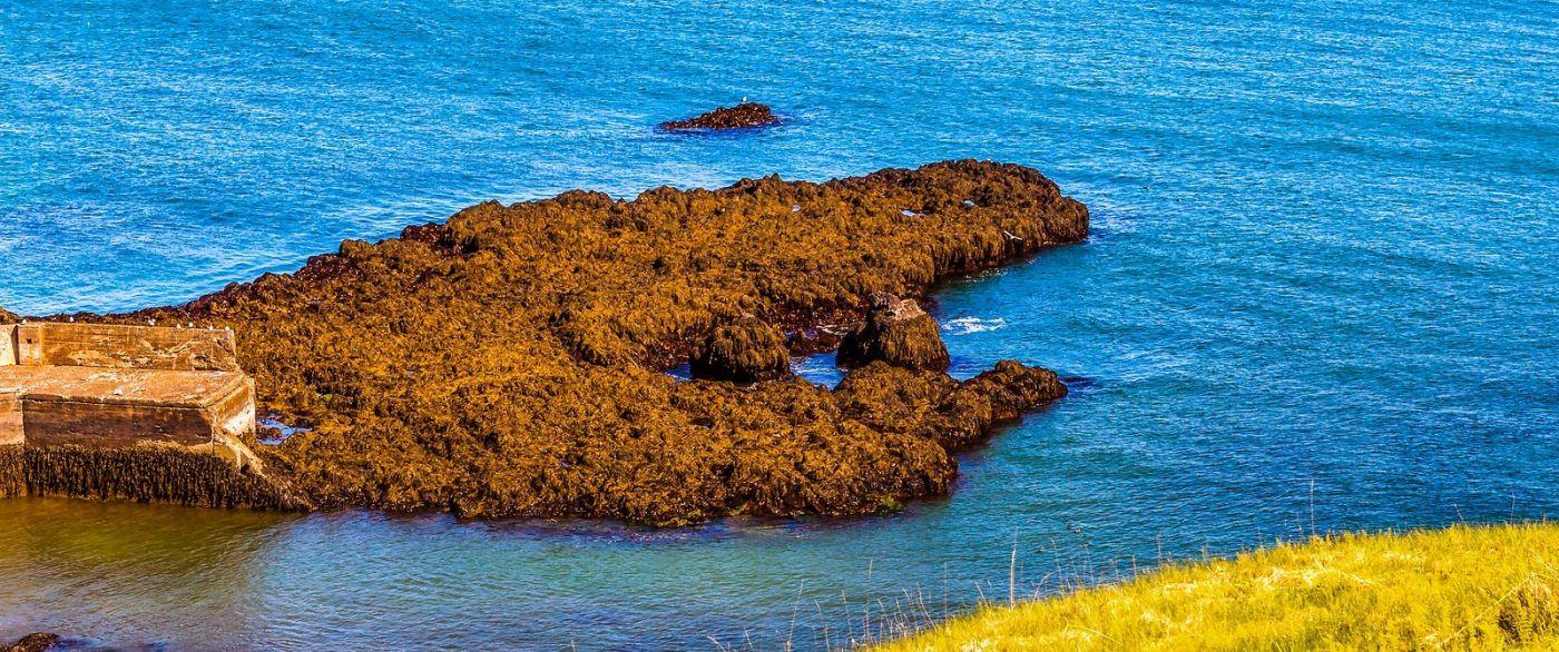 冰岛Arnarstapi,海边美景_图1-4
