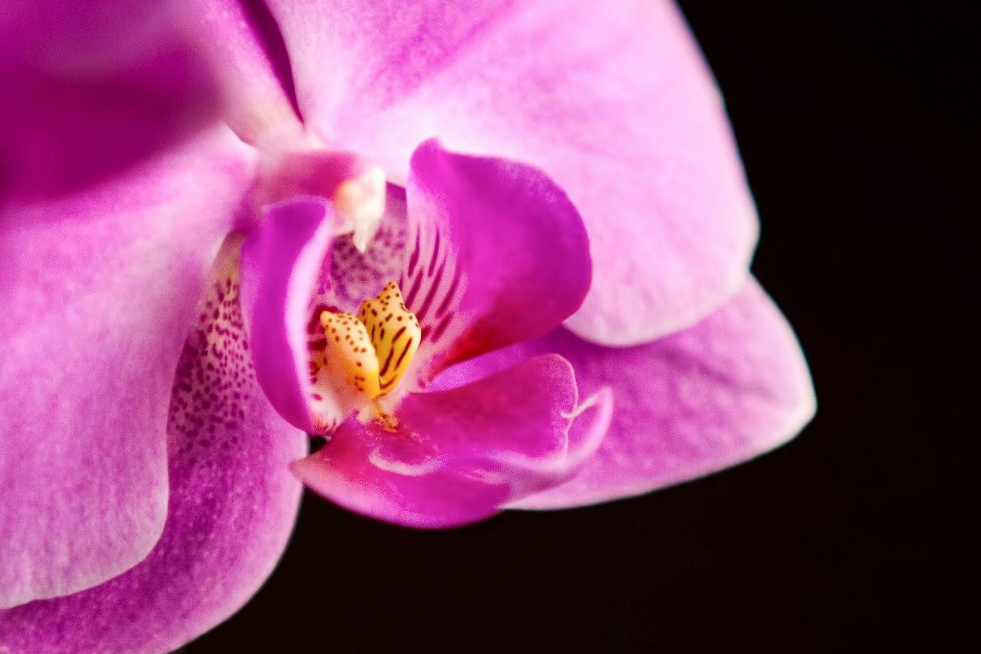 兰花,美丽典雅_图1-34