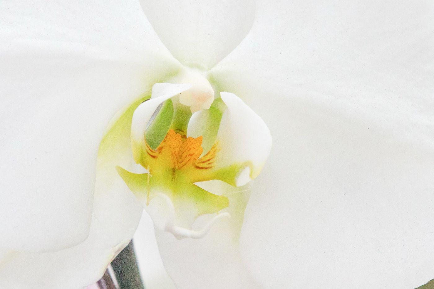兰花,美丽典雅_图1-20