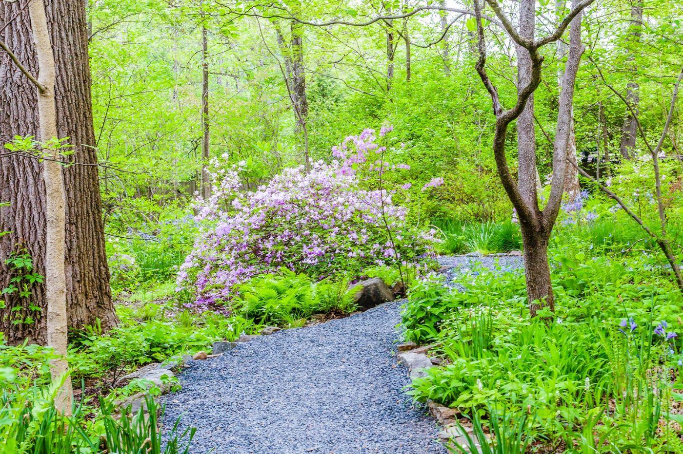 Chanticleer花园,期待春天_图1-7
