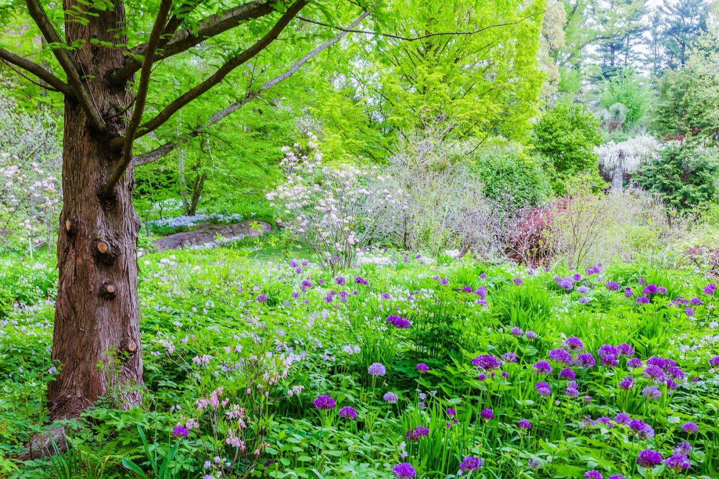 Chanticleer花园,期待春天_图1-25
