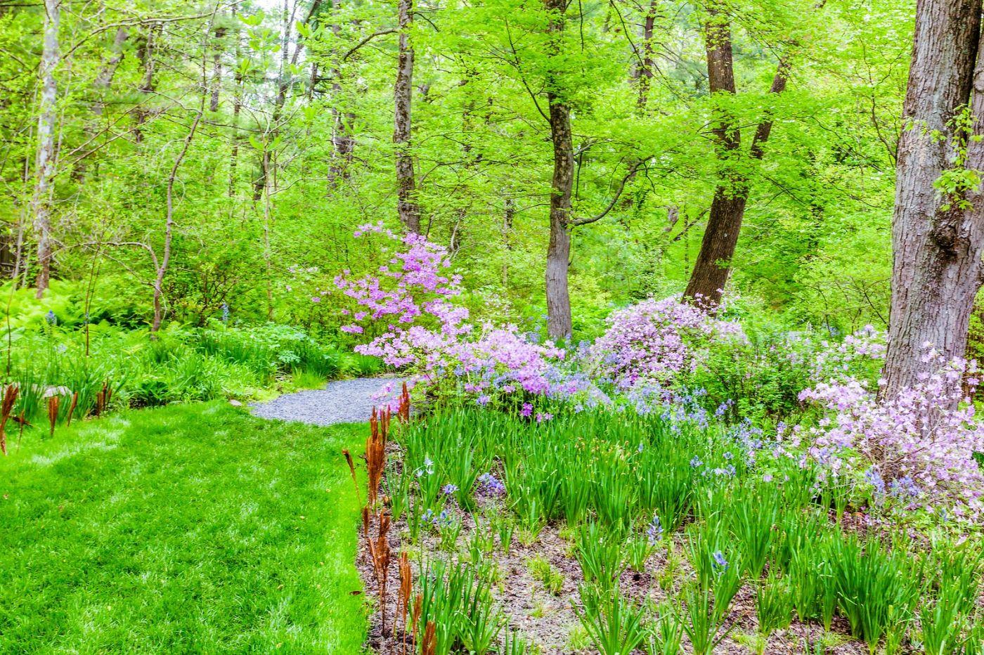 Chanticleer花园,期待春天_图1-26