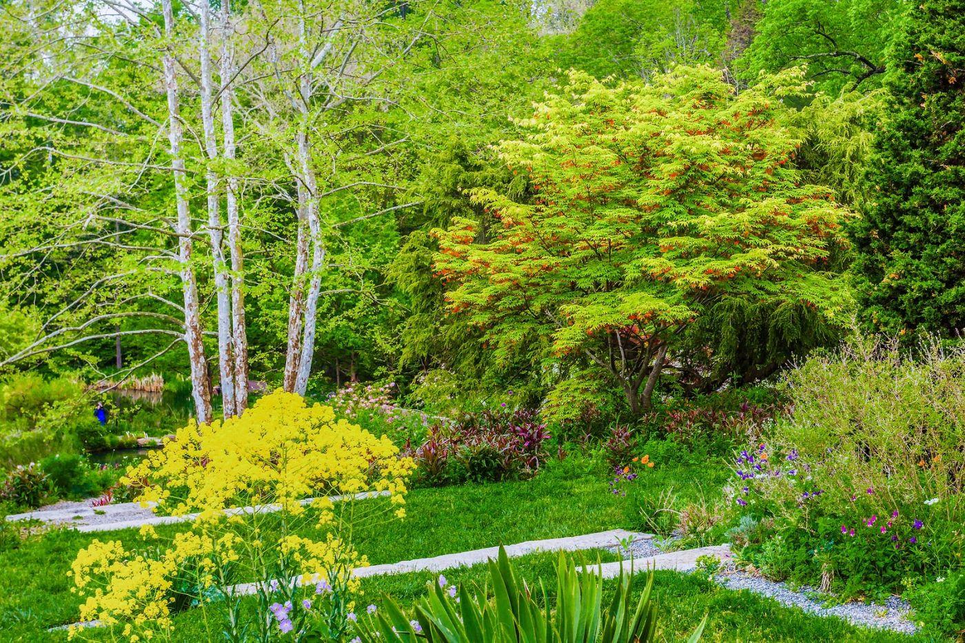 Chanticleer花园,期待春天_图1-37