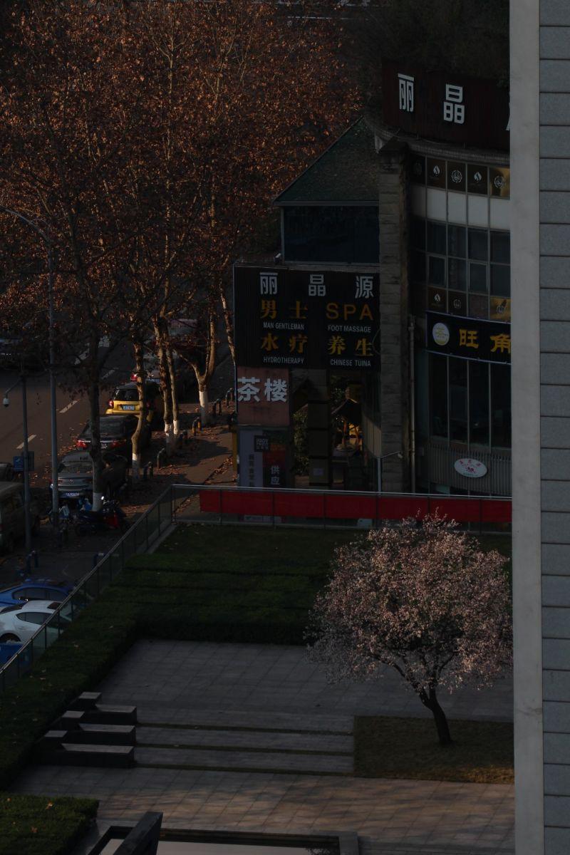 北窗外,那棵树开花了_图1-1