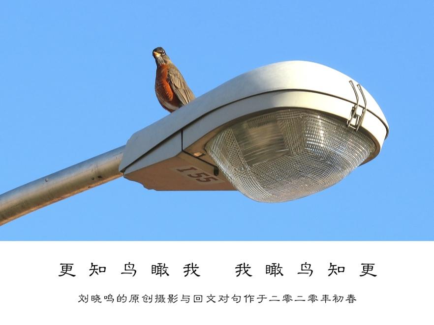 【晓鸣摄影】图文10作_图1-3
