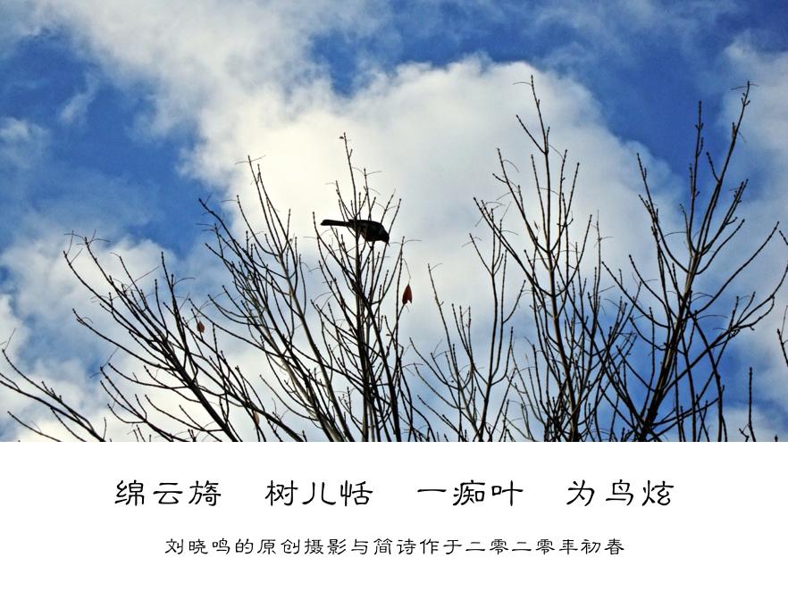 【晓鸣摄影】图文10作_图1-4