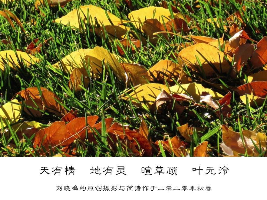 【晓鸣摄影】图文10作_图1-10