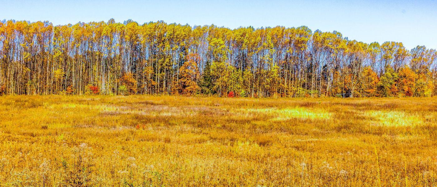 宾州长木公园,季节色彩_图1-37