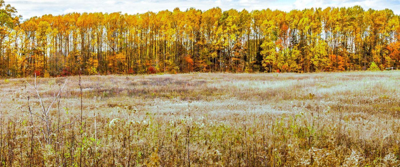 宾州长木公园,季节色彩_图1-35