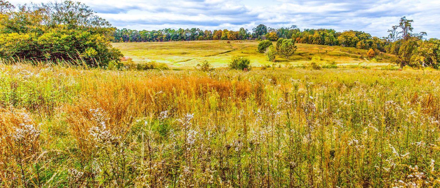 宾州长木公园,季节色彩_图1-36