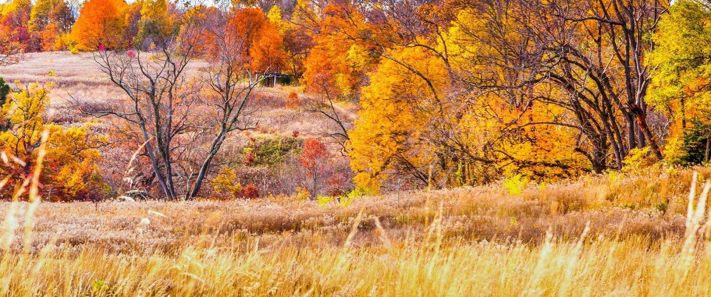宾州长木公园,季节色彩_图1-32