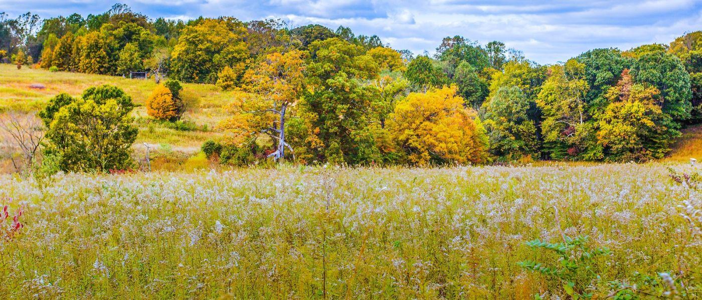 宾州长木公园,季节色彩_图1-30