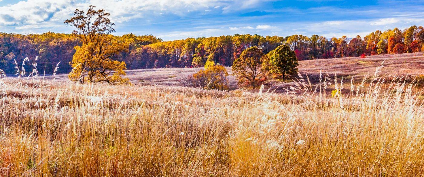 宾州长木公园,季节色彩_图1-29