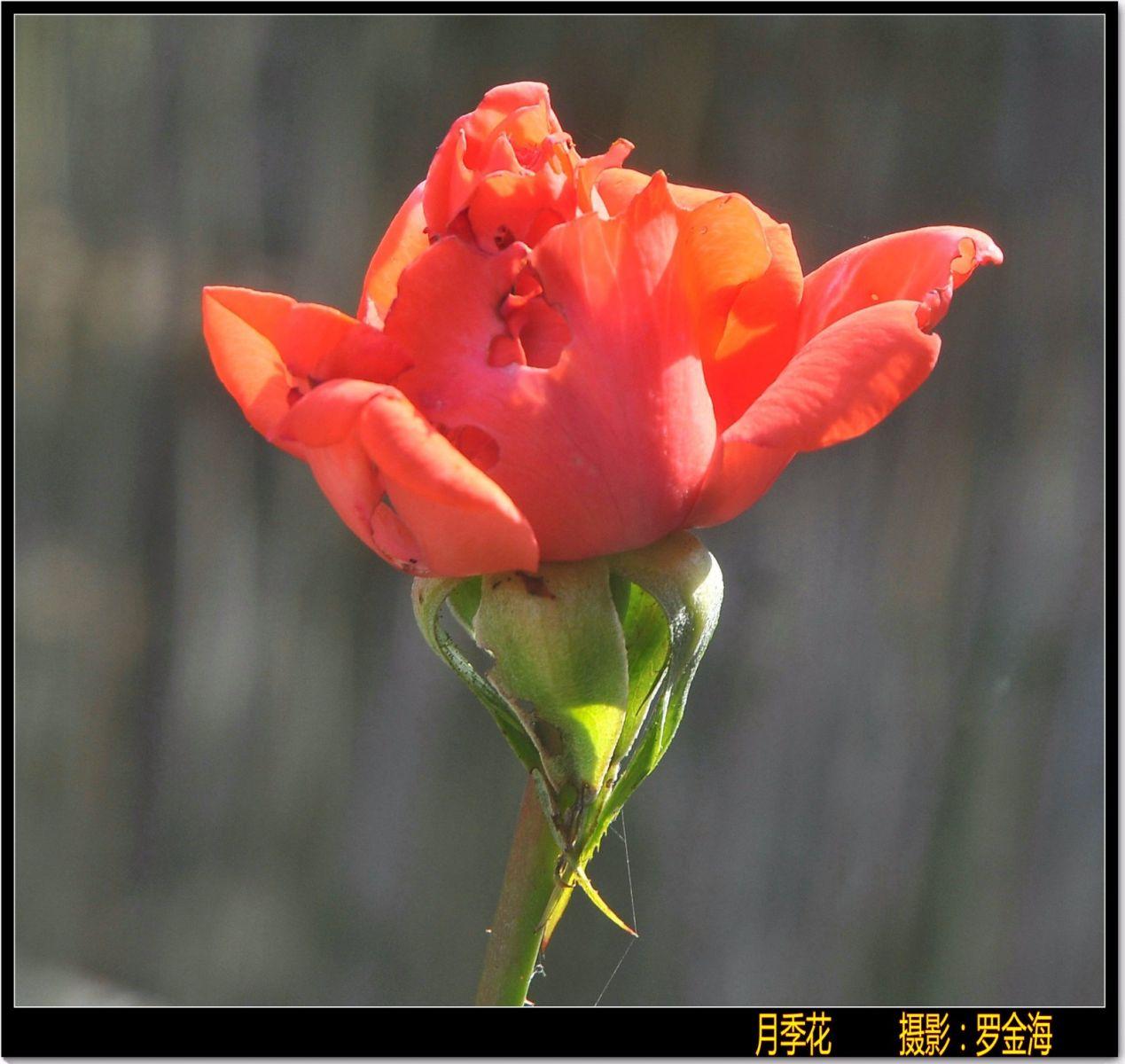 赞母爱·七律(致三八节)_图1-2