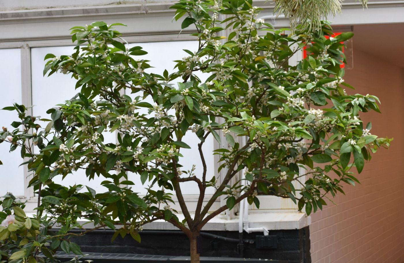 血橙花开_图1-20