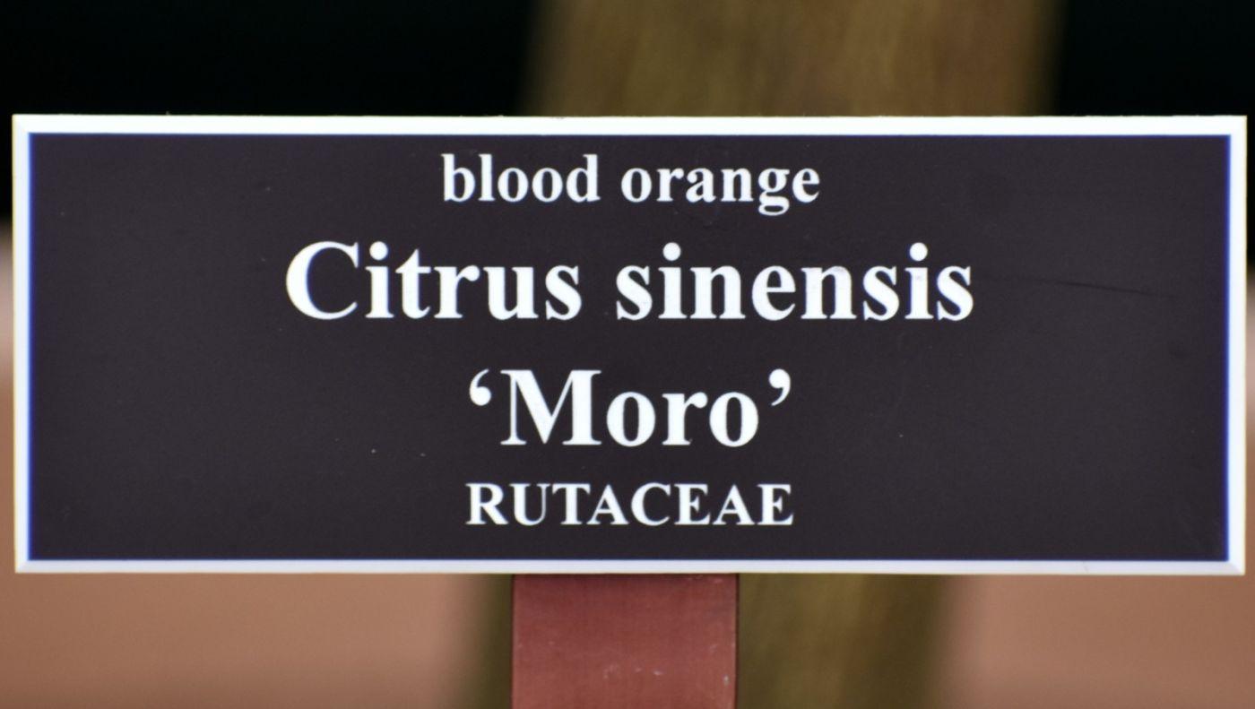 血橙花开_图1-22