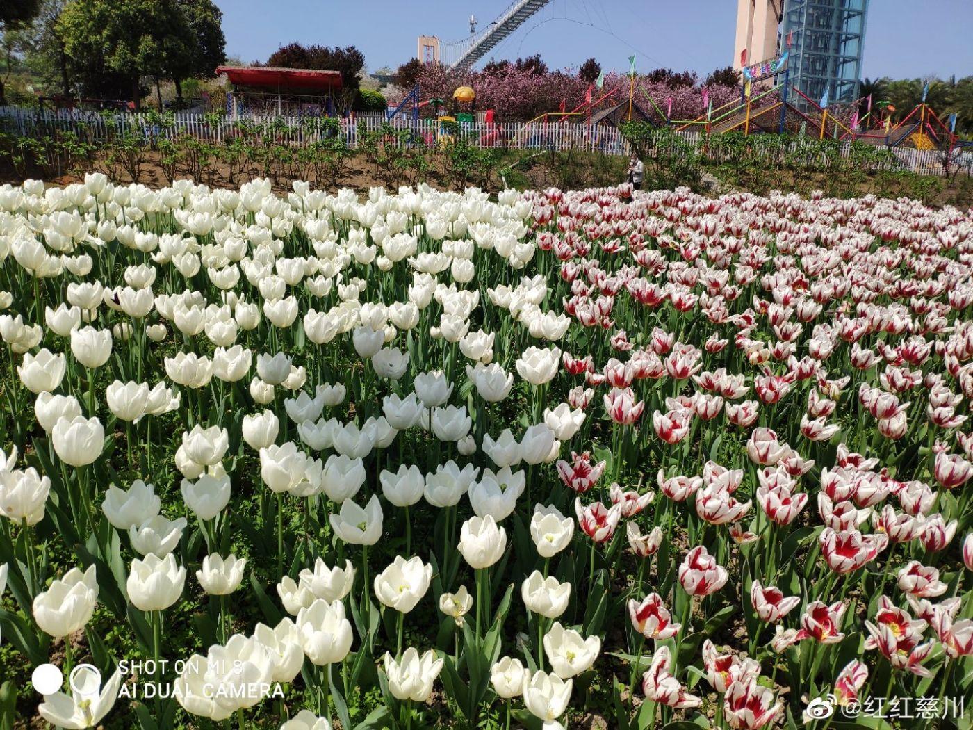 春天_图1-3