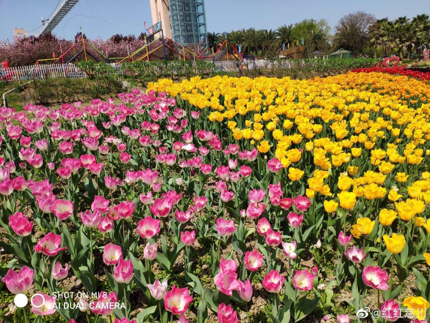 春天_图1-8
