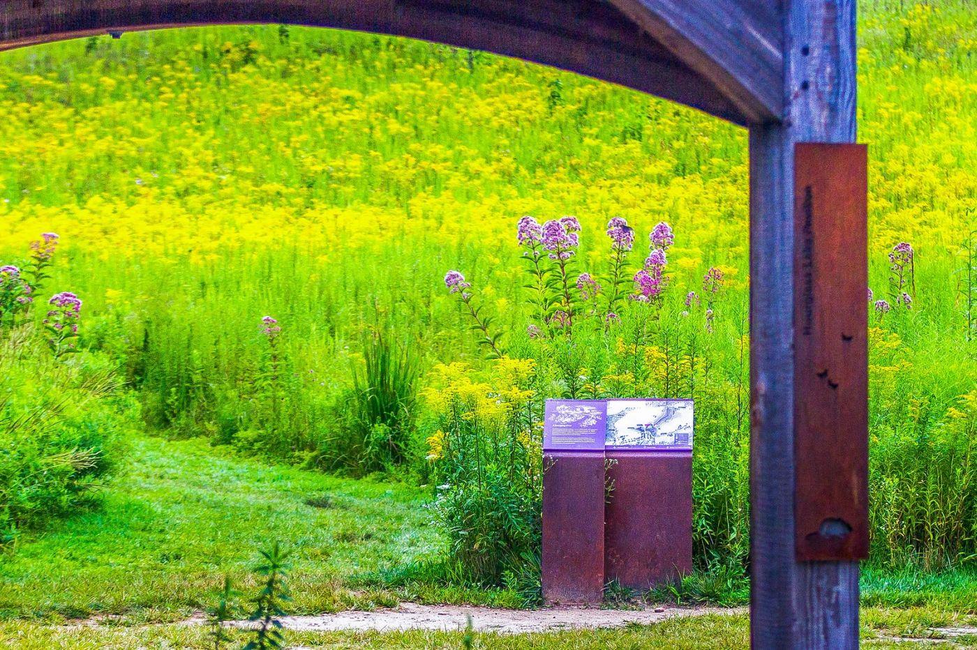 宾州长木公园,熟悉的景色_图1-38