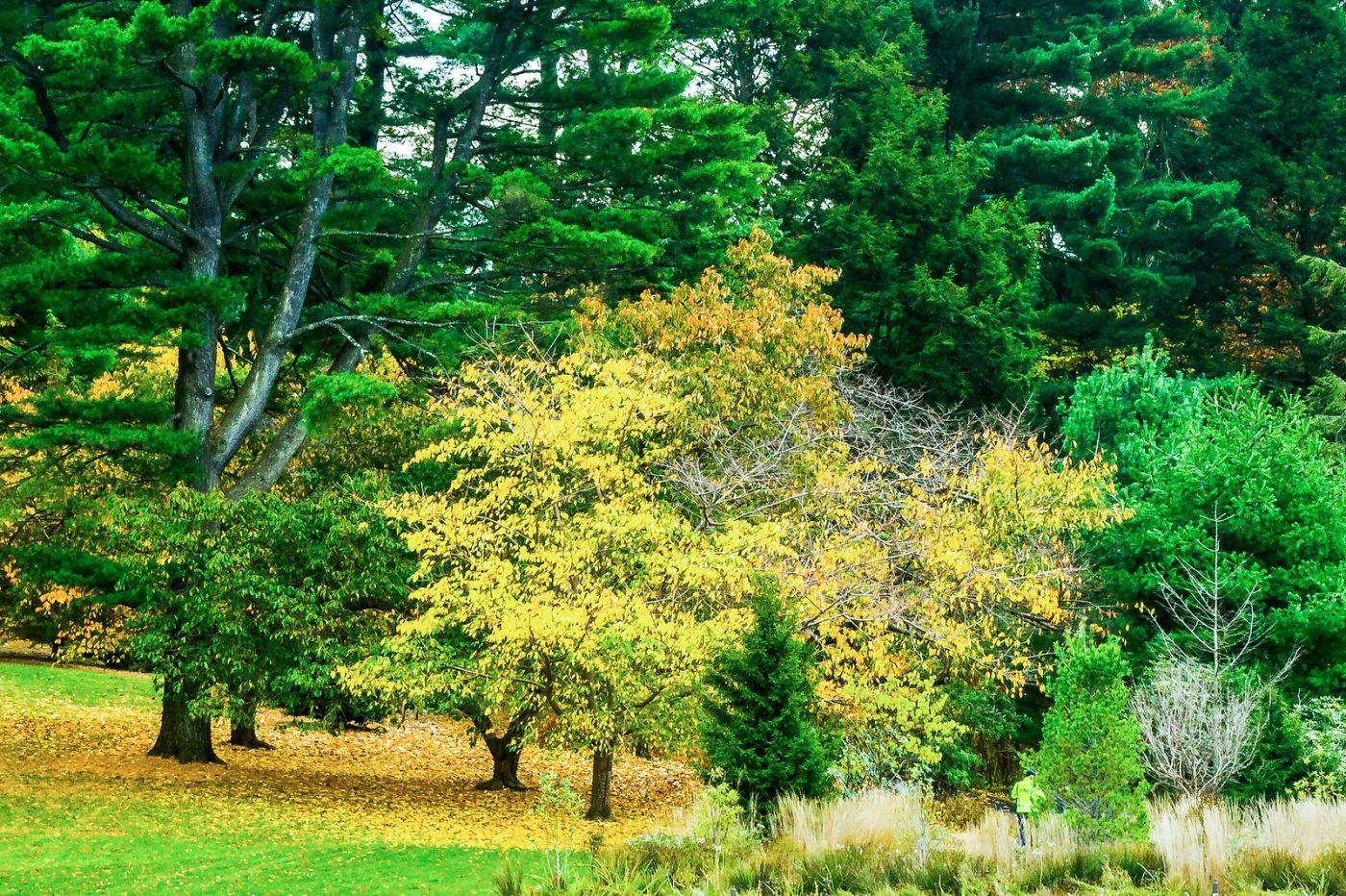 宾州长木公园,熟悉的景色_图1-16