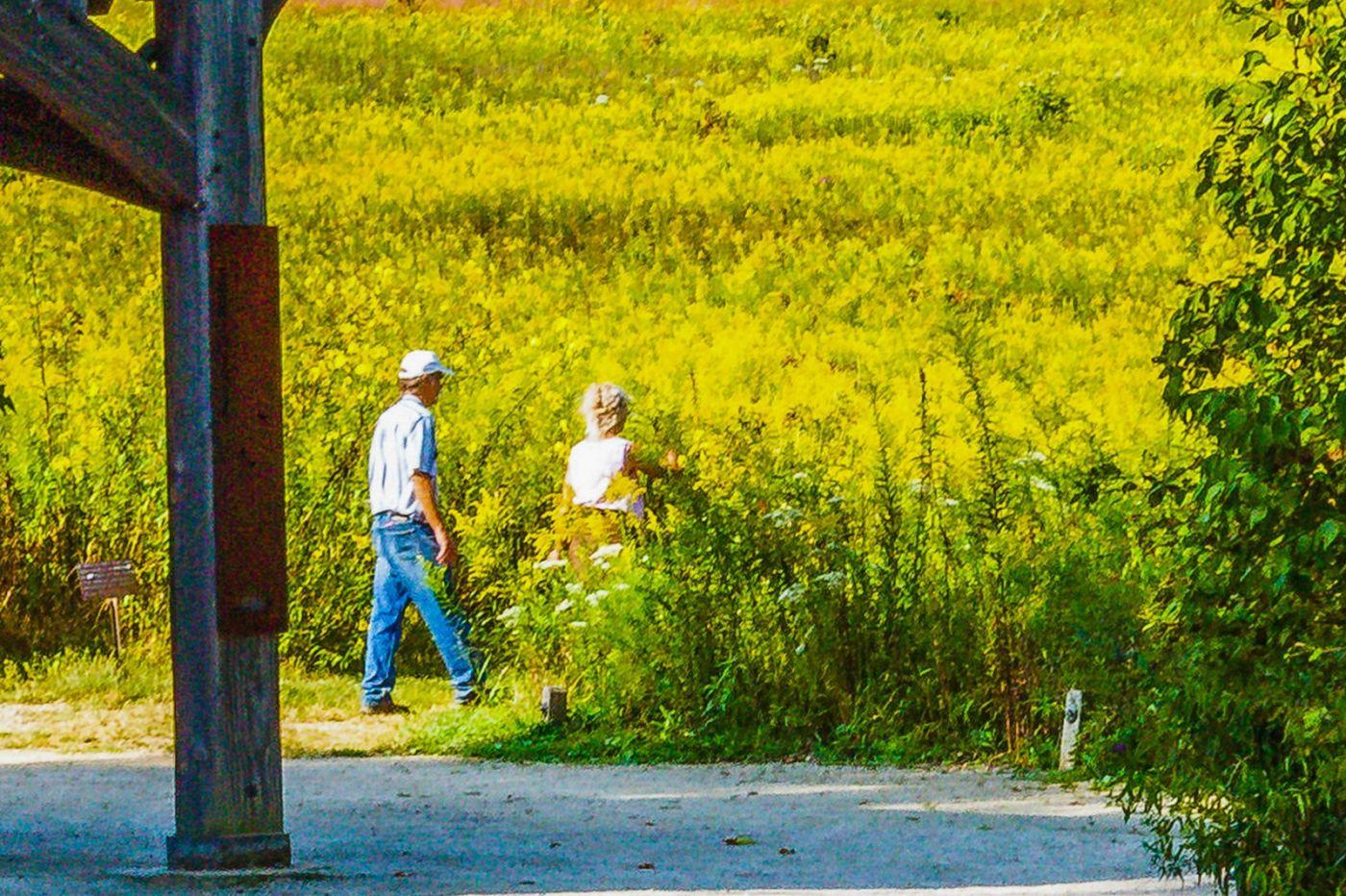 宾州长木公园,熟悉的景色_图1-12