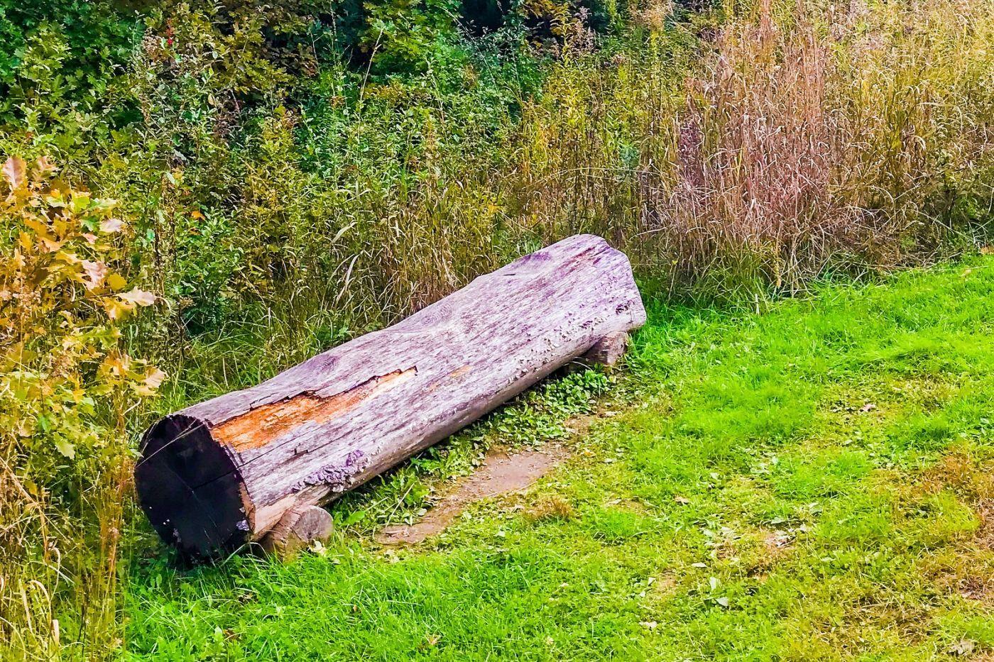 宾州长木公园,熟悉的景色_图1-5