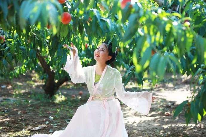 农村常见的桃胶居然如此珍贵,而城里人称它是桃树上的燕窝 ..._图1-1