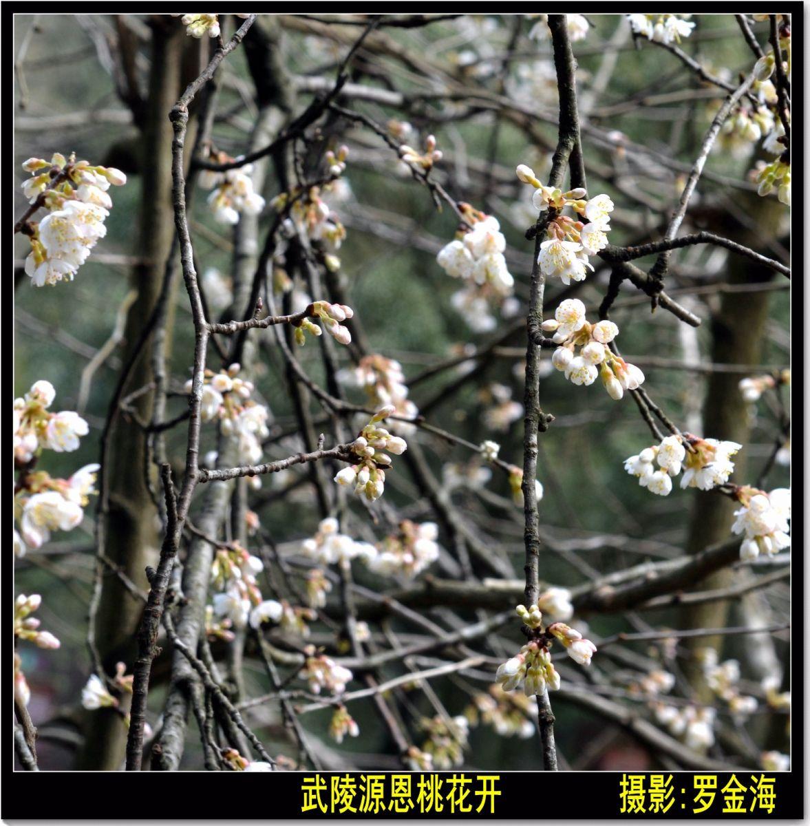 武陵源春赋【古典诗词】_图1-13
