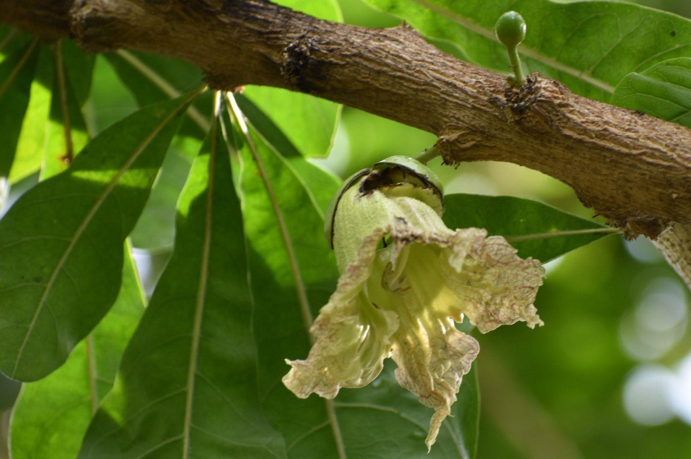 西瓜长在树上_图1-3
